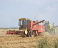 Ministria e Bujqësisë realizon mbi 5 milion euro pagesa për grurë