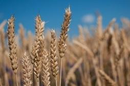 Ministarstvo Poljoprivrede otvara konkurs za podnosenje zahteva za subvencije - direktna placanja