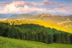 """Fillon fushata për ruajtjen e pyjeve – """"Pyjet janë burim i jetës"""""""