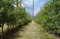 Realizohen pagesat e subvencioneve për pemishtet ekzistuese