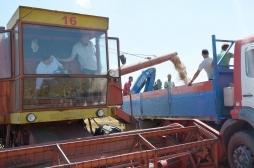 Kosova siguron rreth 90 për qind të nevojave me grurë