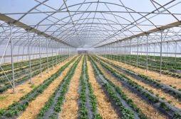 Ministria e Bujqësisë planifikon 43 milionë euro mbështetje për fermerët për vitin 2015